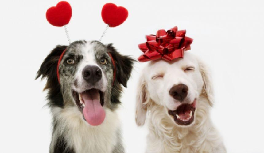 Happy Valentine Dogs