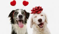 Happy Valentine Dogs